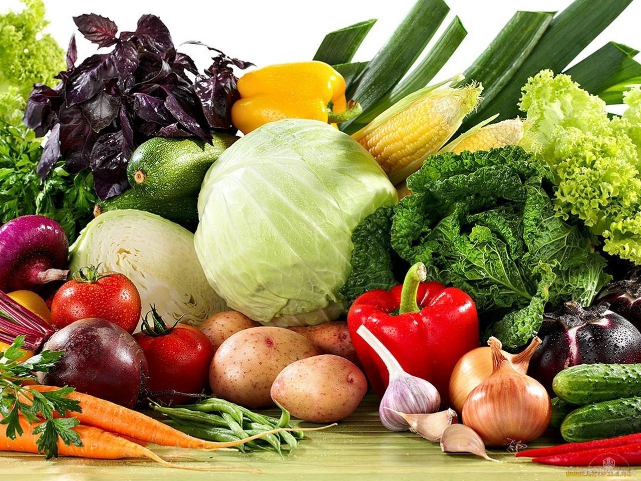 Волгоградские хозяйства собрали в2015 году большой урожай овощей